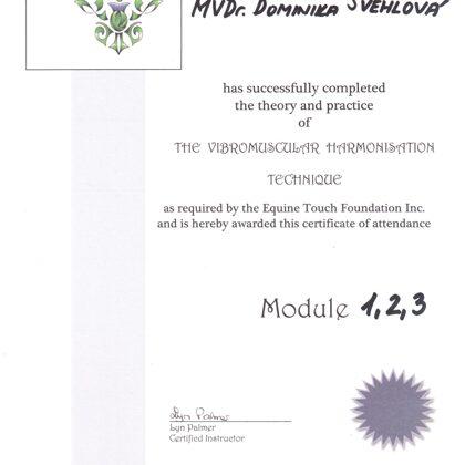 Vibromuskulární harmonizační technika lidi